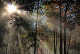 Morning Sunlight Filters Through Autumn Trees