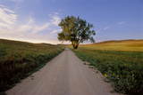 Landscape of a Country Road and Cottonwood Tree