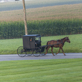 Horse Pulls a Buggy Along on a Country Road in Lancaster County  Pennsylvania