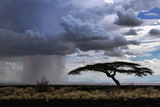 Rain Clouds and a Lone Acacia Tree in a Tropical Desert in Northern Kenya