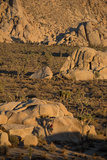 Joshua Tree National Park  California: A Climber on an Unnamed Crack with the Shadow of a Tree