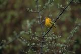 A Warbler Sings in a Tree