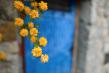 Marigolds Hang in Front of the Blue Door of a Stone Building