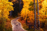 Edwards  Colorado: Colorado Fall Colors in the High Country