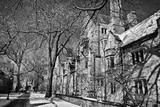 Winter Blizzard at Yale University
