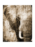 African Animals I - Sepia
