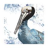 Blue Pelican