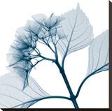 Hydrangeas - Positive (Right)