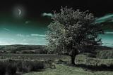 A Tree under a Night Sky
