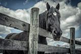 Old Black Horse