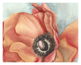 Watercolor Poppy I