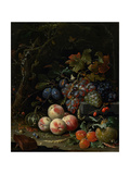 Still Life with Fruit  Foliage and Insects  C1669