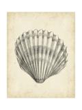 Antique Shell Study III Reproduction d'art par Ethan Harper