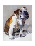 Major Wembly E Bull Dog