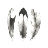 Watercolor Feathers II Reproduction d'art par Grace Popp