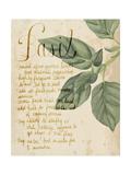 Herb Study I