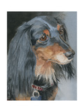 Natalie Long-haired Dachshund
