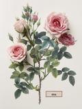 Floral Decoupage - Rosales