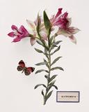 Floral Decoupage III