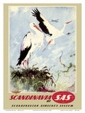 Scandinavia - White Storks - SAS Scandinavian Airlines System
