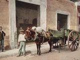 A Mule Cart in Havana Led by a Vendor