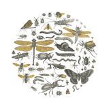 Insect Circle I