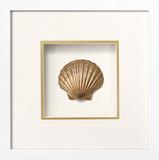 *Exclusive* Irish Deep Shell Shadowbox - Gold