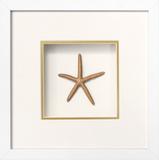 *Exclusive* Starfish Shadowbox - Gold *