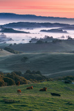 Spring Hills With Fog Petaluma Sonoma California