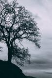 Tree in the Sky  Black and White Mount Diablo  Walnut Creek Danville