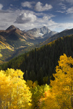 Quaking Aspen Trees  Populus Tremuloides  and Evergreen Forests in a Mountain Landscape