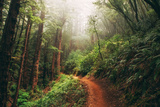 Amazing Misty John Muir Woods Coastal Trail  San Francisco Bay Area