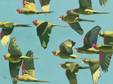 Parrots in Flight - Retro