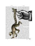 Ring Tailed Lemur on Finger