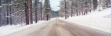 Icy Road and Snowy Forest  California