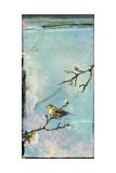 Bird Window II Reproduction d'art par Ingrid Blixt