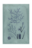 Indigo and Azure Seaweed VIII