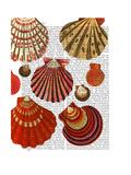 Red Clam Shells Reproduction d'art par Fab Funky