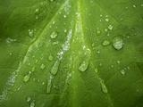 Close Up of Rain Drops on a Leaf