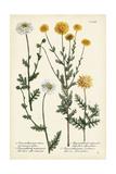 Saffron Garden IV