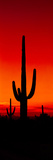 Silhouette of Saguaro Cactus at Sunset  Arizona  Usa