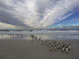 A Group of Southern Rockhopper Penguins Coming Ashore under a Dramatic Cloud-Filled Sky