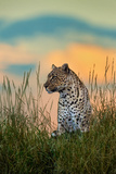 Leopard (Panthera Pardus), Serengeti National Park, Tanzania Papier Photo par Green Light Collection
