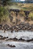 Wildebeests Crossing Mara River, Serengeti National Park, Tanzania Papier Photo par Green Light Collection