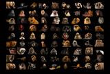 Composite of 90 Different Species of Primates