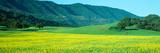 Sunrise  Mustard Fields  Upper Ojai  California