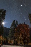 A Moonlit Autumn Night with Orion over Aspen Trees Higher Up Is Planet Jupiter  in Taurus