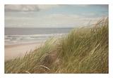 Beach Grass I Reproduction d'art par Irene Suchocki