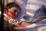 Deux Freres Two Brothers De Jeanjacquesannaud Avec Freddie Highmore  Le Petit Tigre Sangha  2004
