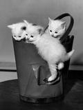 3 Kittens in a Handbag